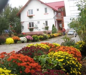 casa crizanteme