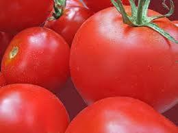 Răsaduri de tomate –  Balkan F1 si Stara Mechta F1