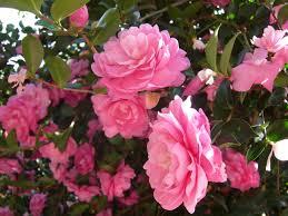 flori de pe net