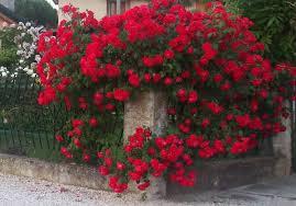 paul scarlet 1